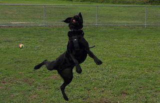 Lilli Catching
