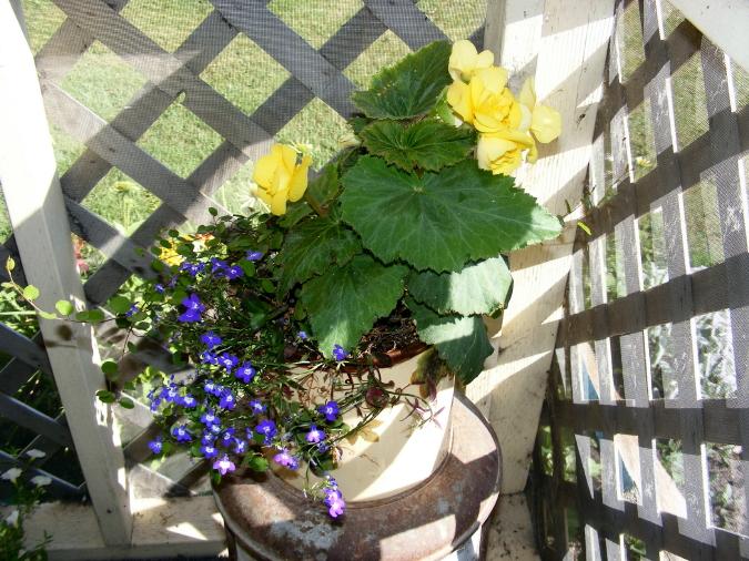 Garden July 001_1