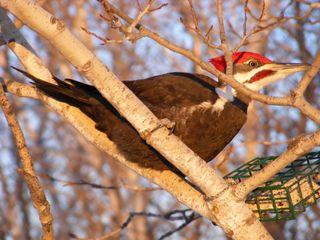 Woodpecker 2012 002_1