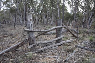 A_bush_gate