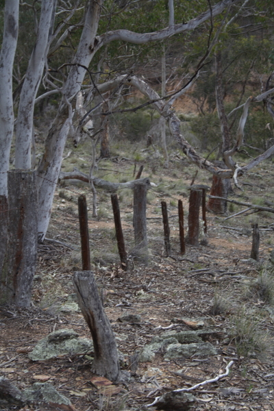 An_old_bush_fence