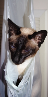 Cat_in_a_bag_1