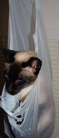 Cat_in_a_bag_3
