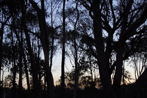 Trees against Sunset